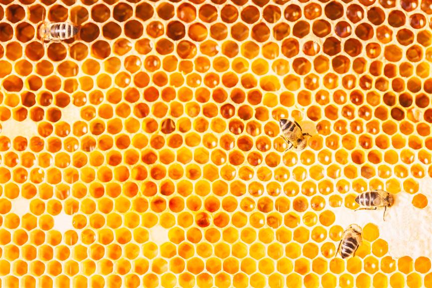 Les abeilles, un modèle pour les salariés