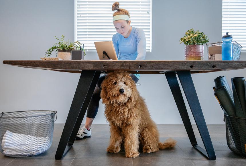 Lorsque l'animal de compagnie accompagne au bureau
