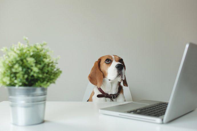 animaux-bureau-bien-etre-mieux