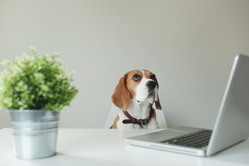 Bêtes de travail: quand les animaux s'invitent au bureau
