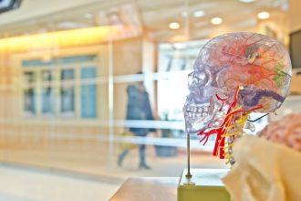 Neuroscience et QVT